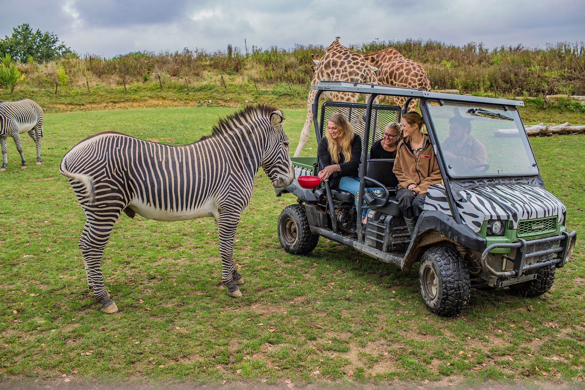 VIP Zebra Feeding Experience at Chessington