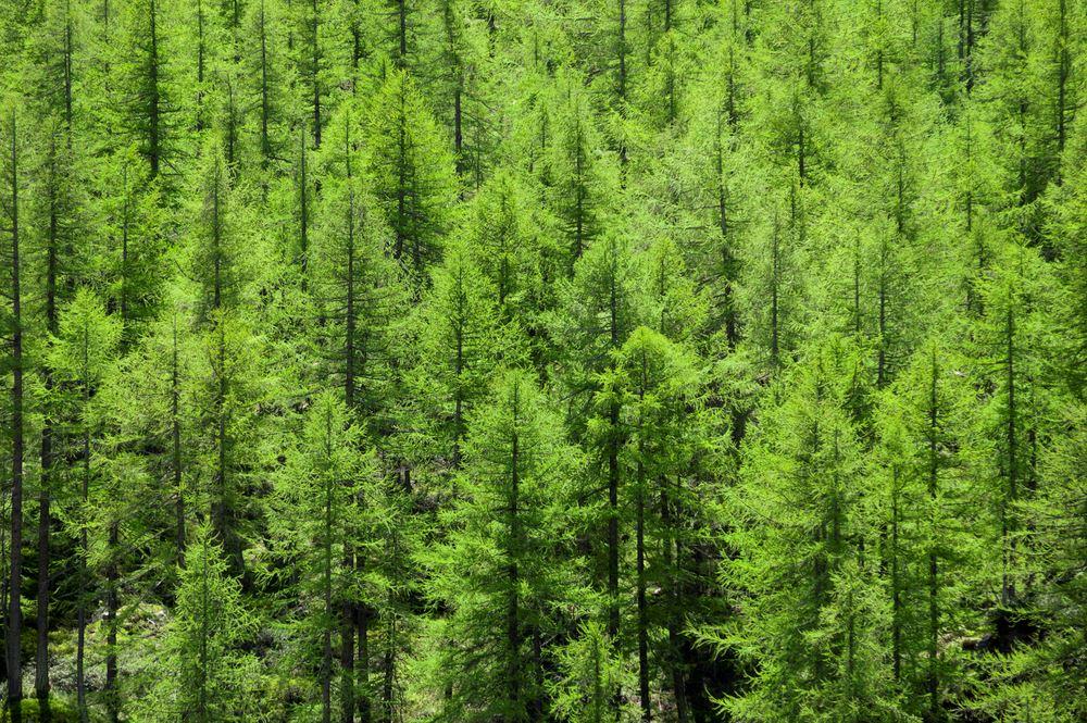 Evergreen trees representing evergreen content