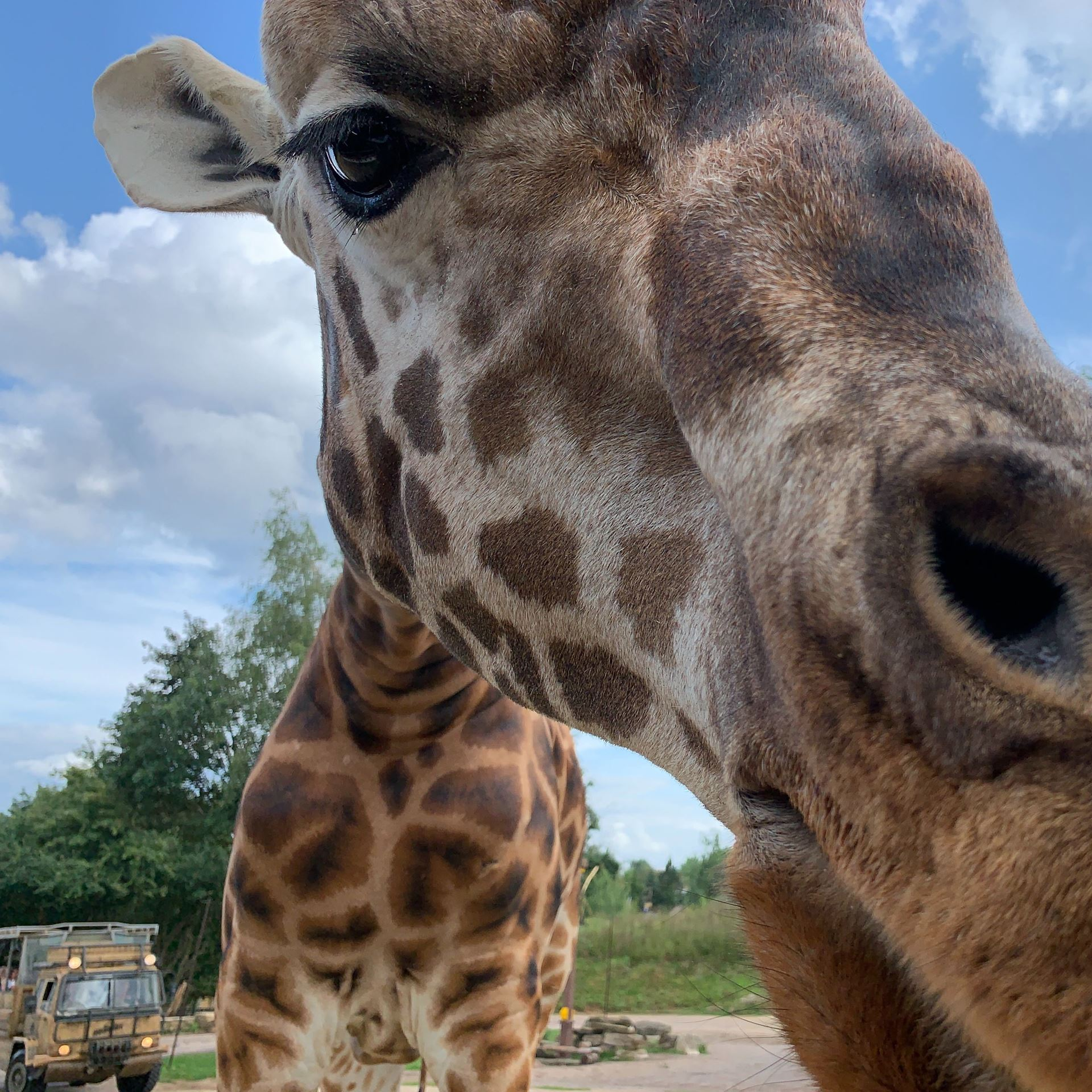 Feeding the Giraffes at Chessington